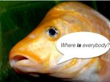 Are you doing anxiety & depression? Photo of carp