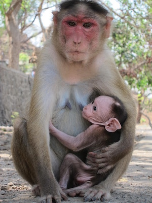 Are you doing anxiety & depression? Poto of rhesus money & baby