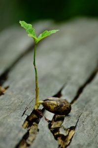 Develop a Growth Mindset - photo of baby oak tree