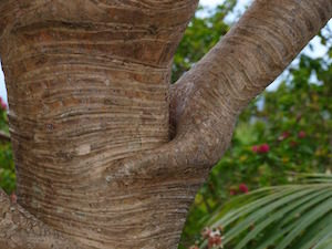 Are you suffering interpretation? Photo of interesting tree trunk
