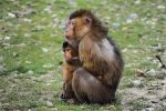 How to get rid of anxiety - photo of anxious ape with baby