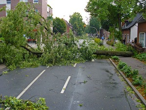 photo of fallen tree